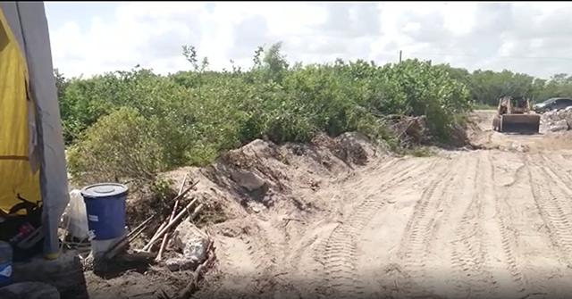 Denuncian que personal de Semarnat y Profepa solapan destrucción de mangle enano y duna costera