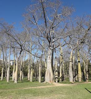 Il bosco di Chorisie