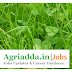 Young Professional I-B.Sc Agri Job
