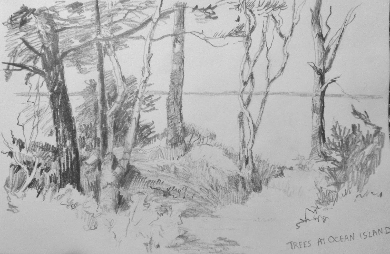 Exploration Of Ocean Island That I Mentioned In The Last Post Spotted This Group Trees What Attracted Me Was Dappled Nature Scene