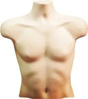 Torso (tubuh bagian atas)