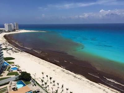 Algas nas praias de Cancun