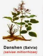 radix salvia-kandung utama-tasly danshen plus-herba jantung