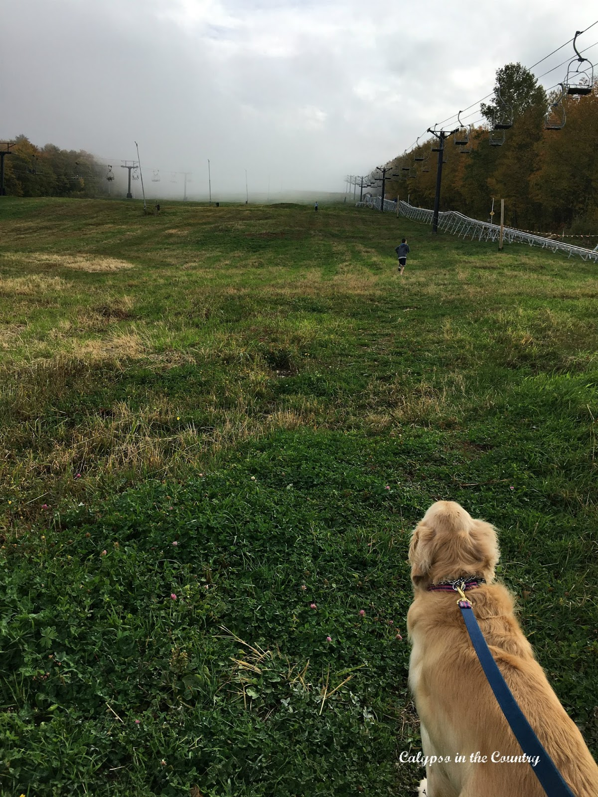 Killington Ski Slopes in the Fall with a golden retriever