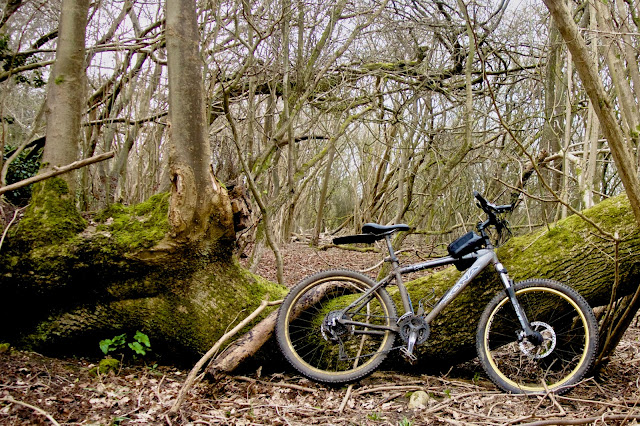 mountain bike leant against a fallen tree