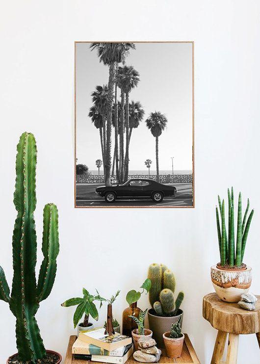 decoracion-con-cactus