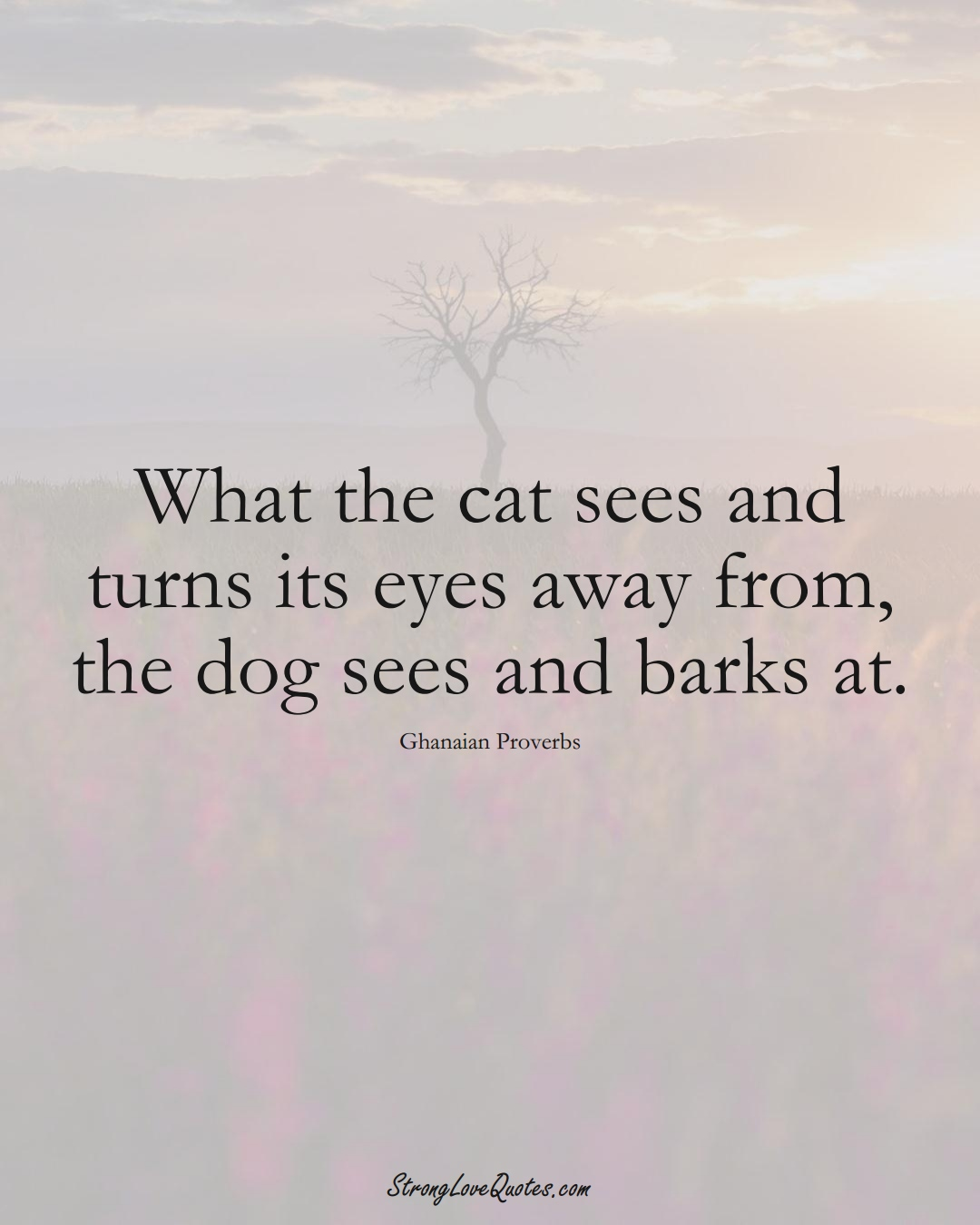 What the cat sees and turns its eyes away from, the dog sees and barks at. (Ghanaian Sayings);  #AfricanSayings