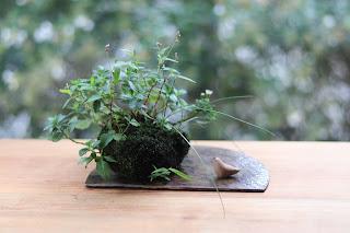 イヌタデの咲いた山野草盆栽の値洗いとヒヨコの置物