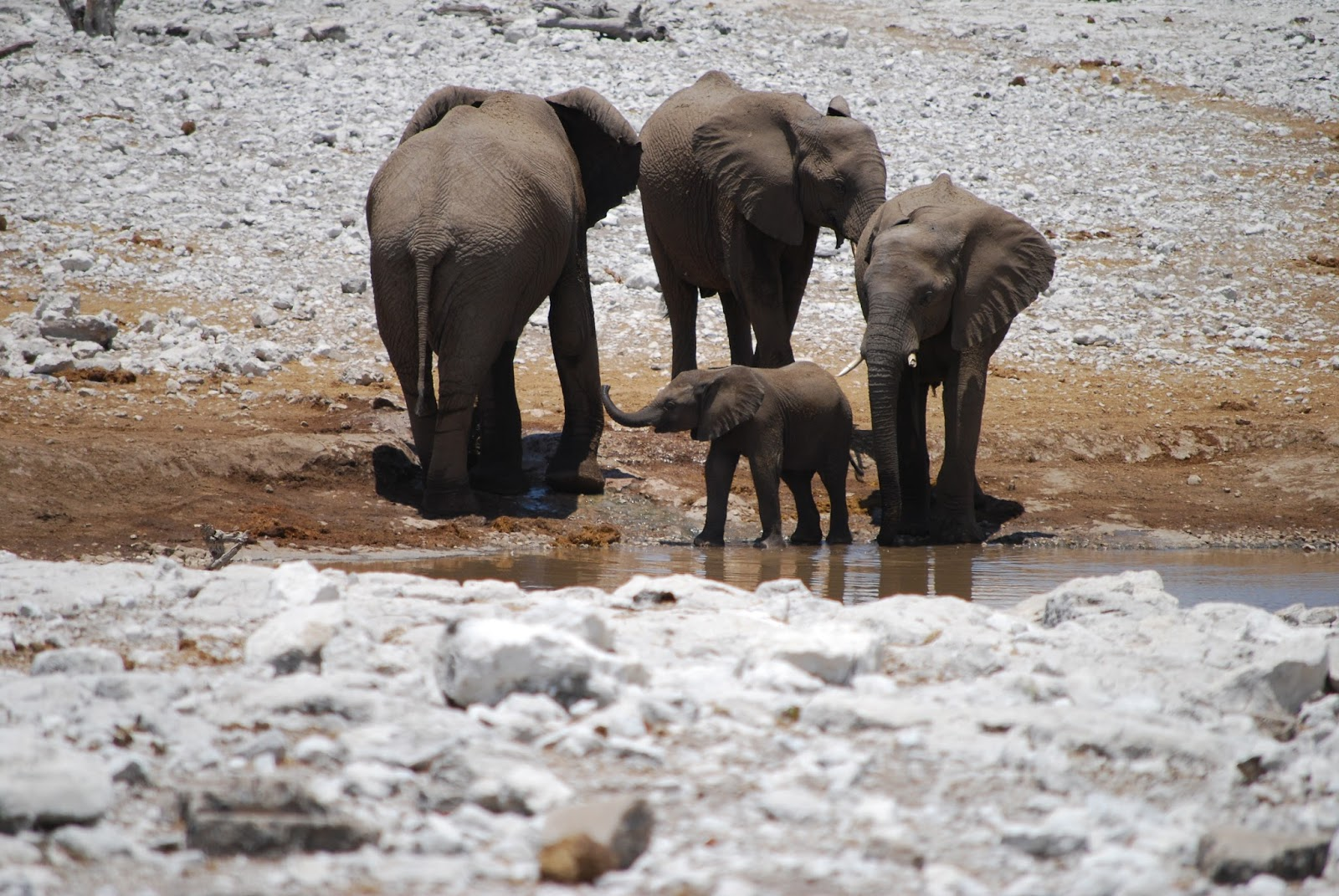 A group of elephants with a baby elephant.