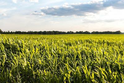 alasan agrobisnis semakin digandrungi