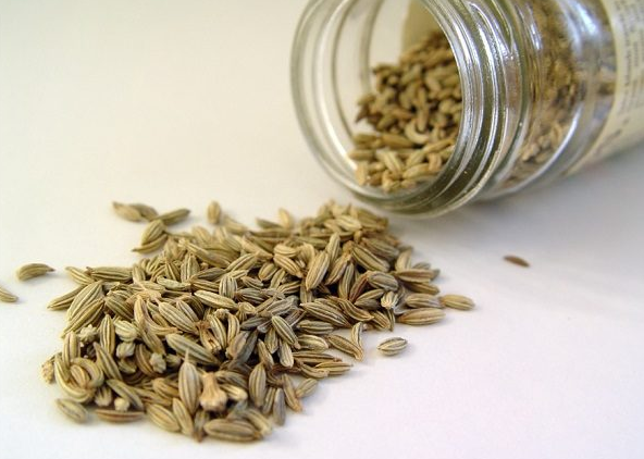 Benefits of fennel for pregnant women in the first months