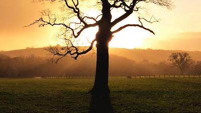 Papel de Parede Celular Pôr do Sol com Árvore