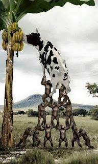 donkey carry cow form banana