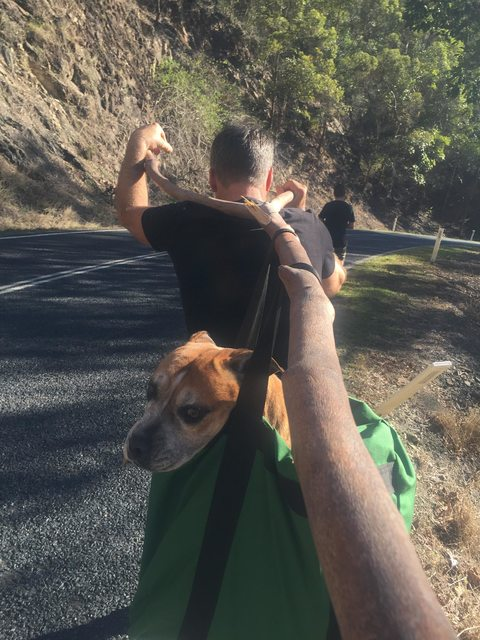 Perro estaba cansado y sus rescatistas hicieron esto
