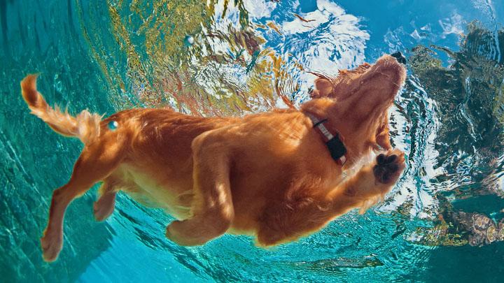 pet friendly vacations florida