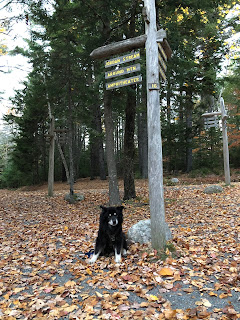 dog sitting by trail signs