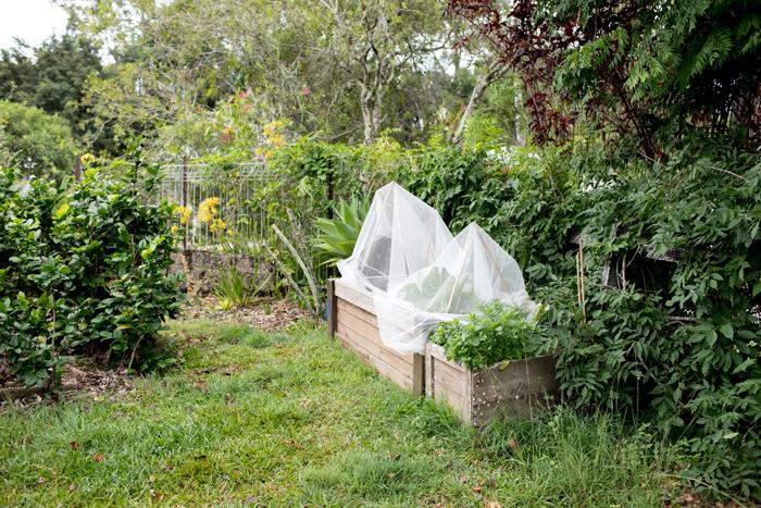 netted raised veggie bed