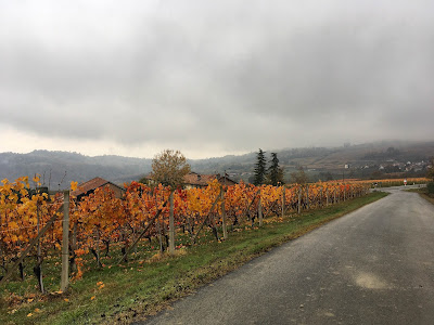cycling piedmont italy carbon road bike rental in novello barolo wine routes