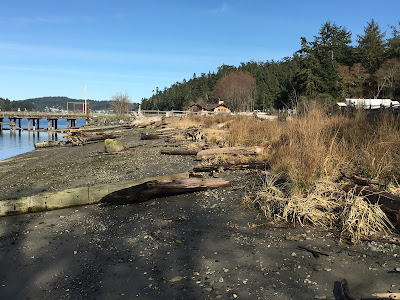 Photo of Cornet Bay shoreline after bulkhead removed and other shoreline improvements made.