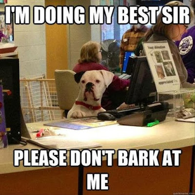 Funny dog pictures : I am doing my best