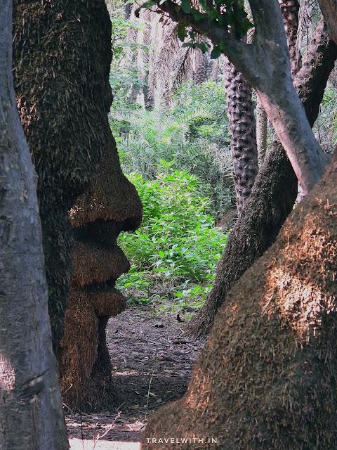trees shaped like a face