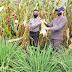 Kasat Bimas Hanny Gumerung Panen Jagung Bersama Petani di Perkebunan Ruuan Unima