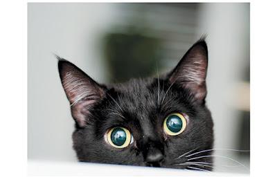 Understanding Cat Body Language And Behaviour