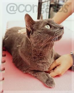 Gato Acupuntura Gatera Rumbo