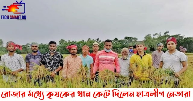 Bangladesh Chhatra League leaders cut the paddy of a farmer in Sonagazi during Ramadan