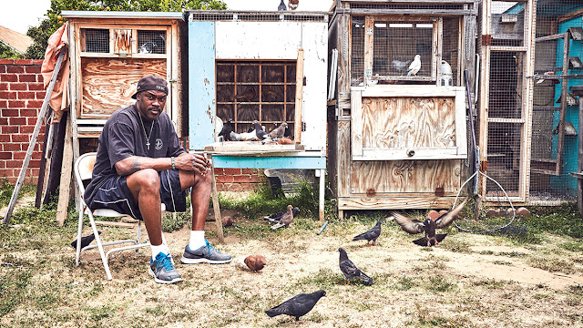 a man sits alone in his back yard with pigeons
