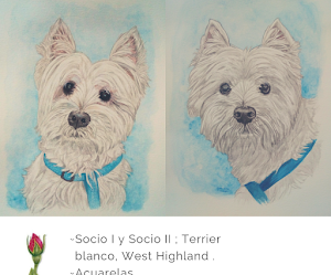 Socio. West Highland Terrier