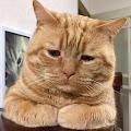 Komik Anak Kucing Yang Lucu Dan Bikin Baper
