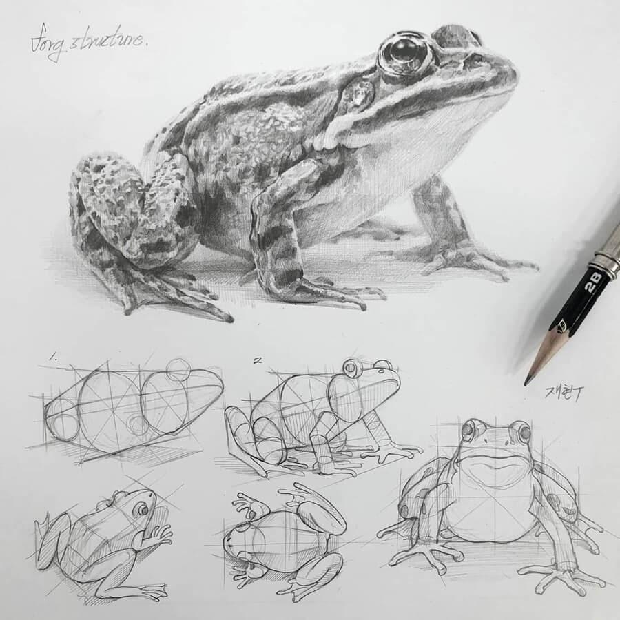 04-Big-eye-frog-Anjjaemi-www-designstack-co
