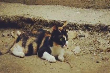 Jangan Buru-Buru Diusir, Ternyata Inilah Pertanda Kucing Melahirkan Di Rumah