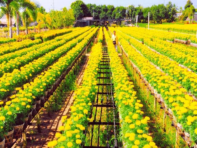 Lễ hội tràn đầy sắc hoa ở Sa Đéc