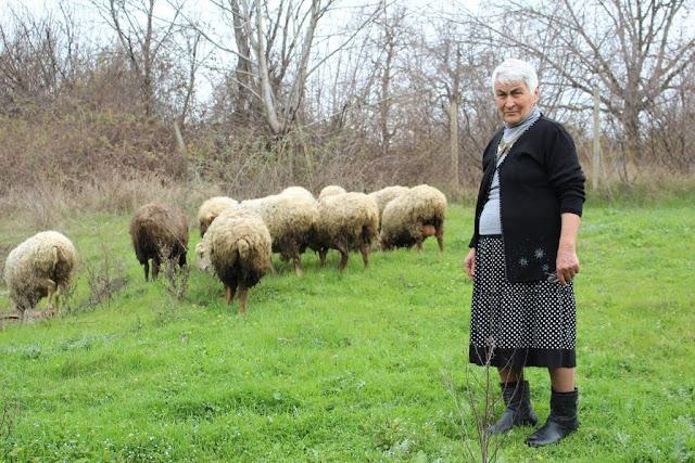Mil familias criaran ganado en Armenia