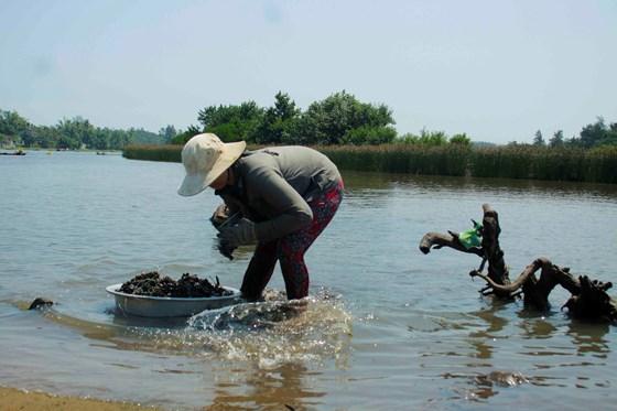 Người dân Quảng Ngãi đổ xô đi xúc chíp chíp bán giá 4.000 đồng/kg