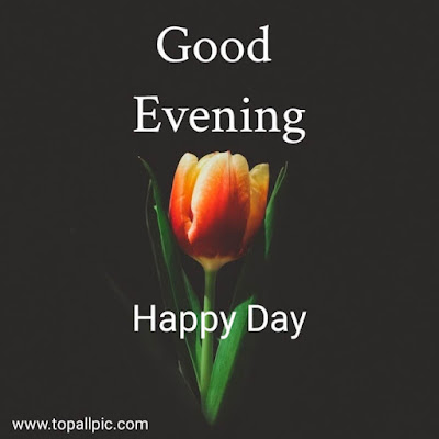 good evening images with love flowers for whatsapp
