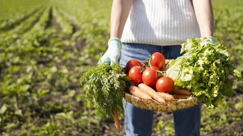 Organik ve Sağlıklı Beslenme