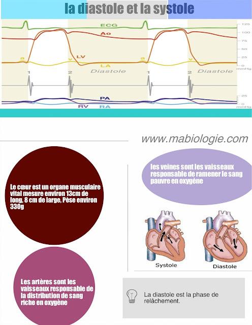 la différente entre la diastole et la systole