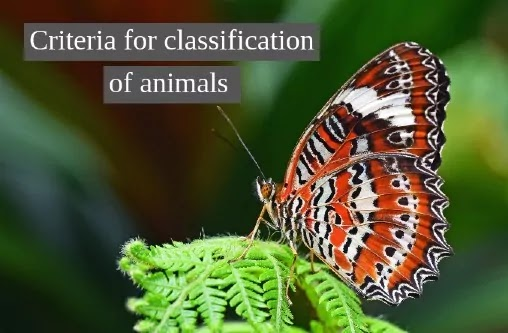 Criteria for classification of animals