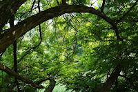 Floresta - Floresta Nacional na Lei 9985/00: Unidade de Conservação
