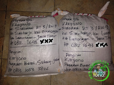 Packing benih padi pesanan  KARYONO Lamongan, Jatim