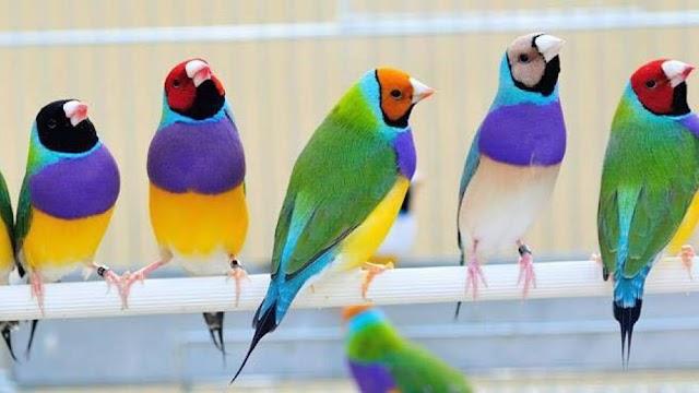 6 κανόνες για την ευζωία του κατοικίδιου πτηνού σας