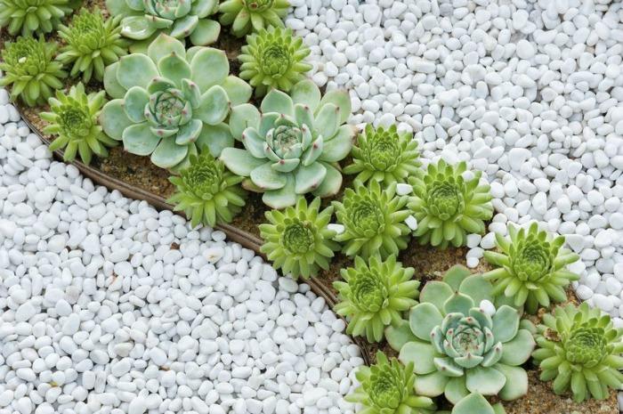 Combinar suculentas en el jard n guia de jardin for Cactus de exterior