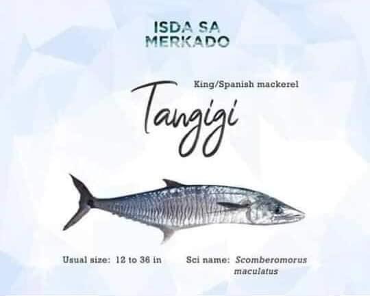 Isda Tangigi / Tanigue (King / Spanish Mackerel)