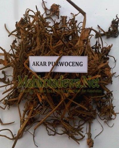 lia herbal akar purwoceng