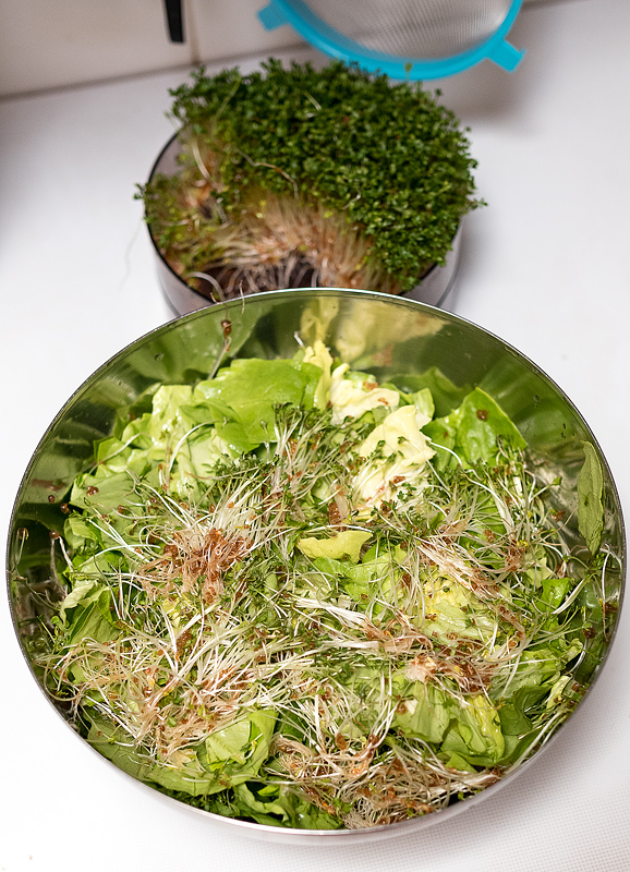Micro greens - cress sprouts in green salad