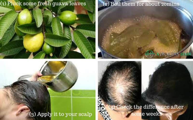 guava leaves, hair loss