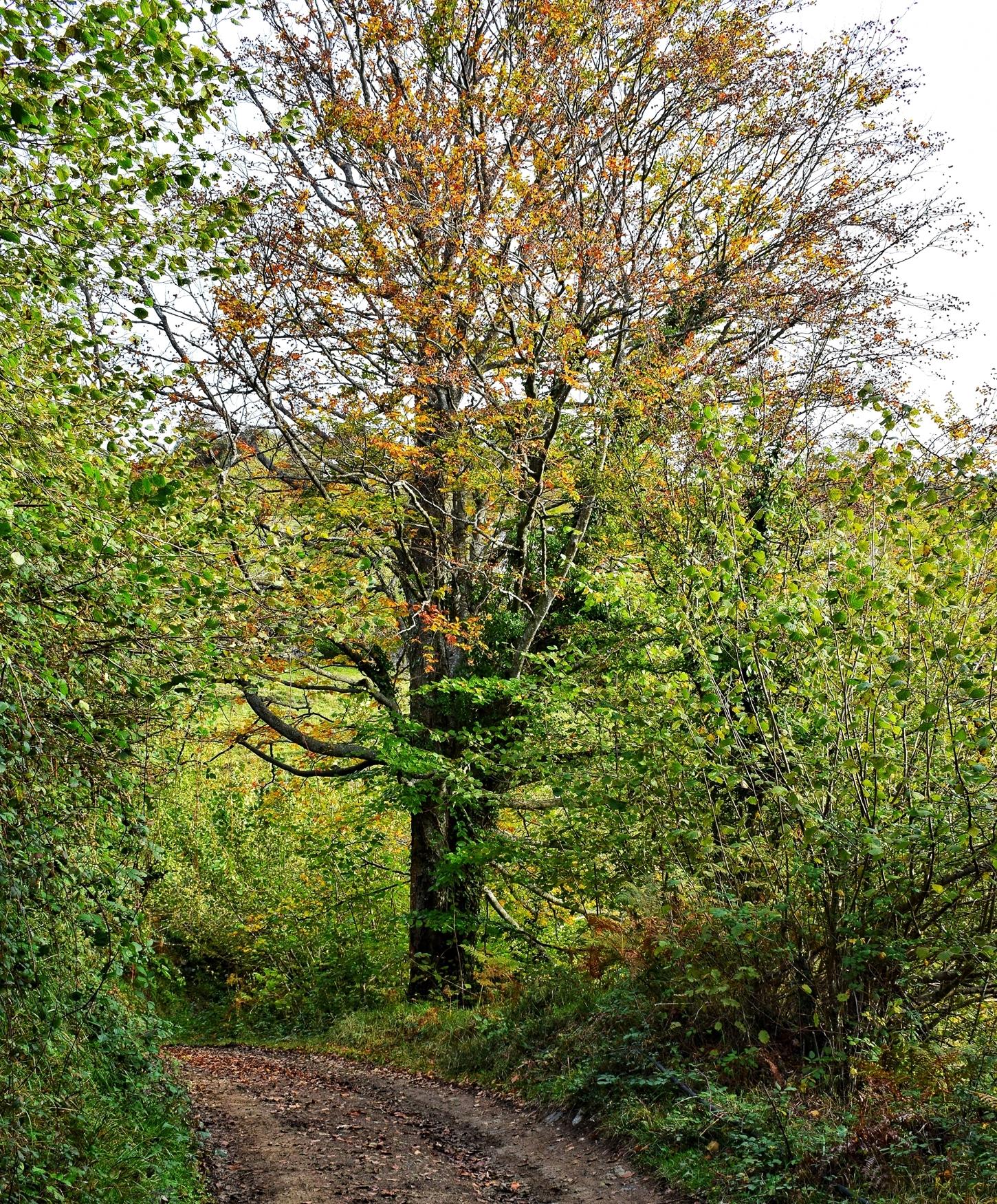 arbol del otoño en aller